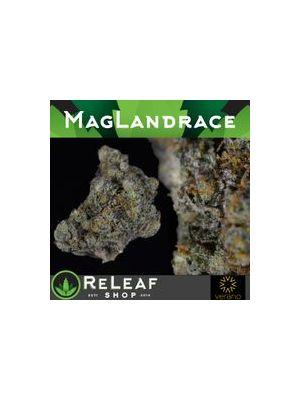 Mag Landrace by Verano - $65 1/8